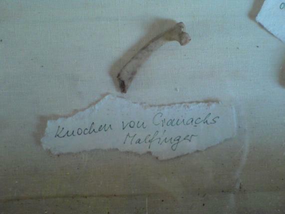 Cranach Knochen des Malfingers ...