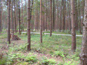 Gedenkstätte KZ-Außenlager Wöbbelin