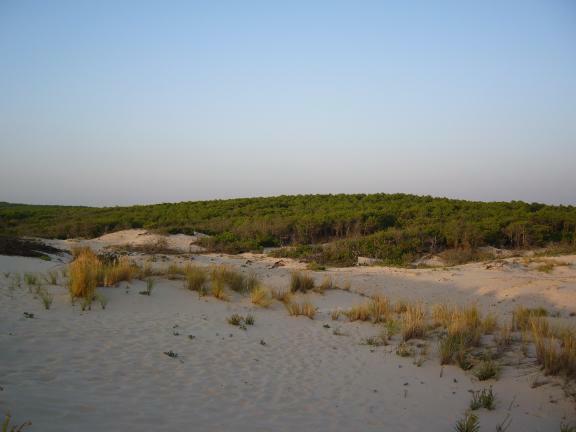 Le Porge Ocean Strand 01