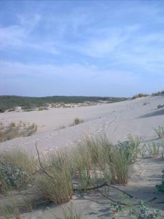 Le Porge Ocean Strand 02