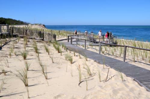 neue Strandsicherung mit Strandhafer am Strand 'Plage du Petiti Nice' im Sommer 2012 (Foto: Pline)