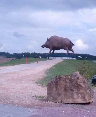Woinic - das größte Wildschwein der Welt